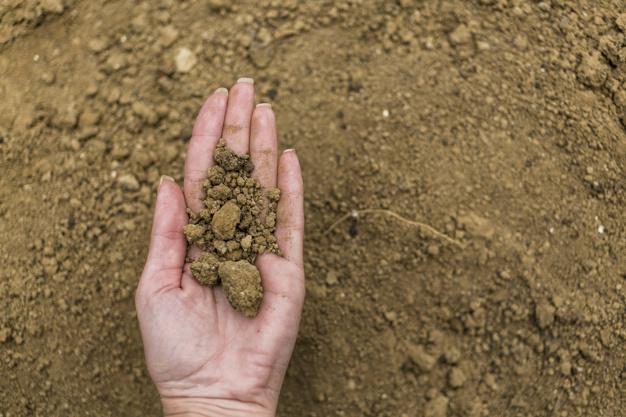 Como Lograr un Suelo Ideal para tu Huerta Orgánica
