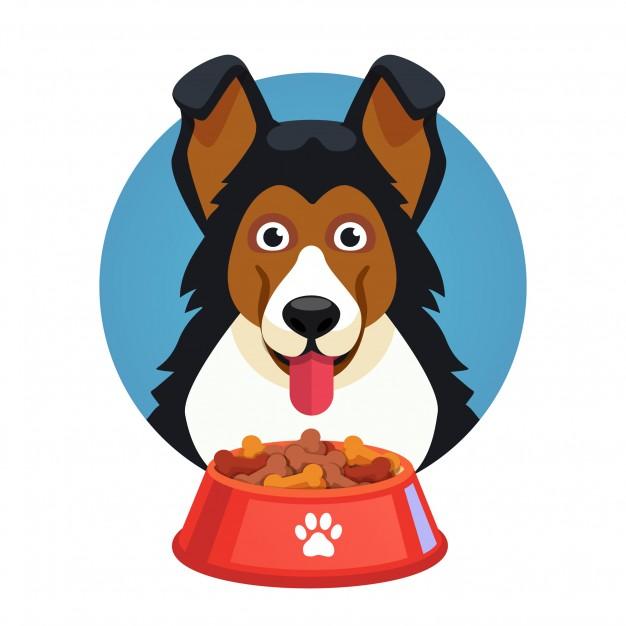 5 pasos para escoger la dieta adecuada para tu perro