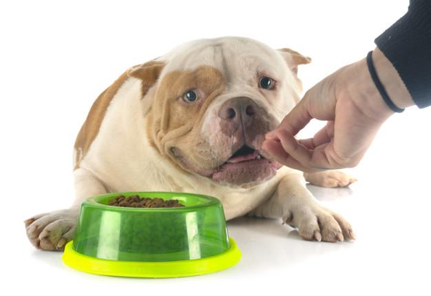 dieta adecuada para tu perro de acuerdo a la raza