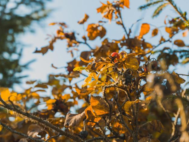 hojas secas por exceso de fertilizantes o productos químicos
